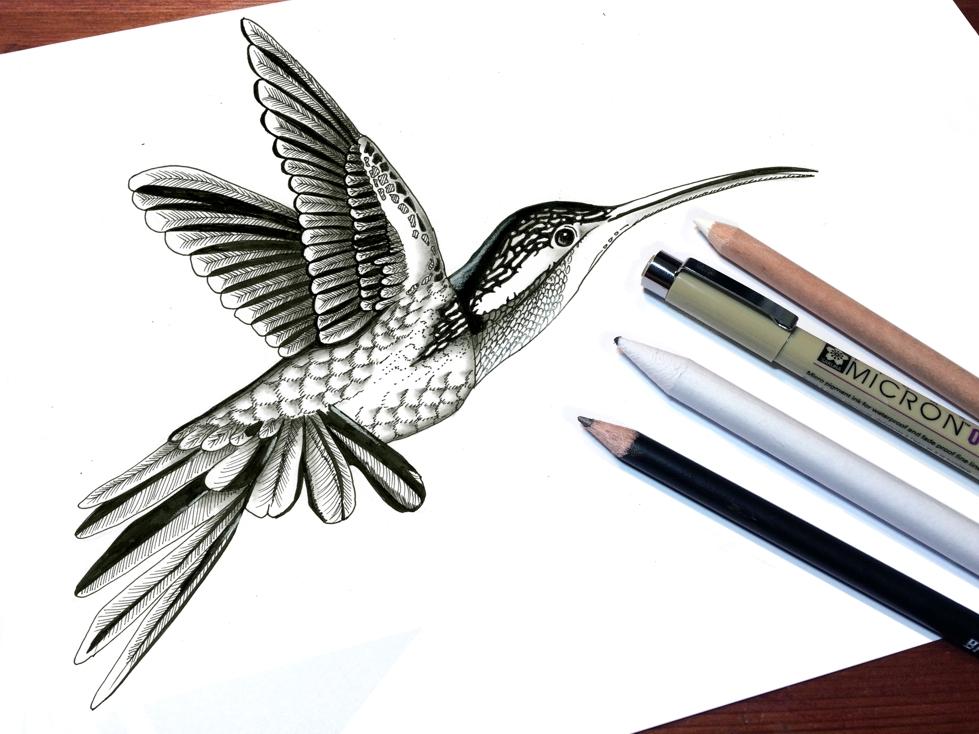 Mijn Interpretatie Van Een Kolibrie